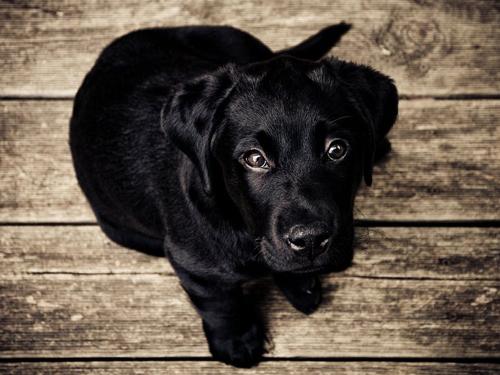 Jak dbać o rasowego psa?