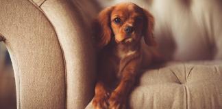Co daje posiadanie psa?