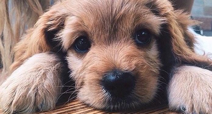 Jak pomóc psu w upały?