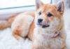 zasady dla właścicieli psów